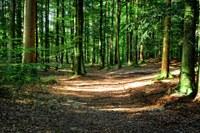 forest-972800_1920.jpg