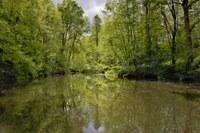 pond-5167938_1920.jpg